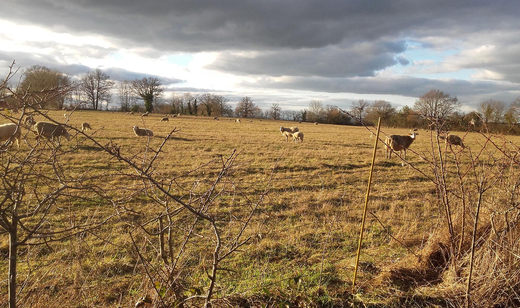 FRANCE - SHEEP FARM FOR SALE. Ref : L10