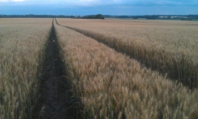 FRANCE - ARABLE LAND FOR SALE. Ref : A03