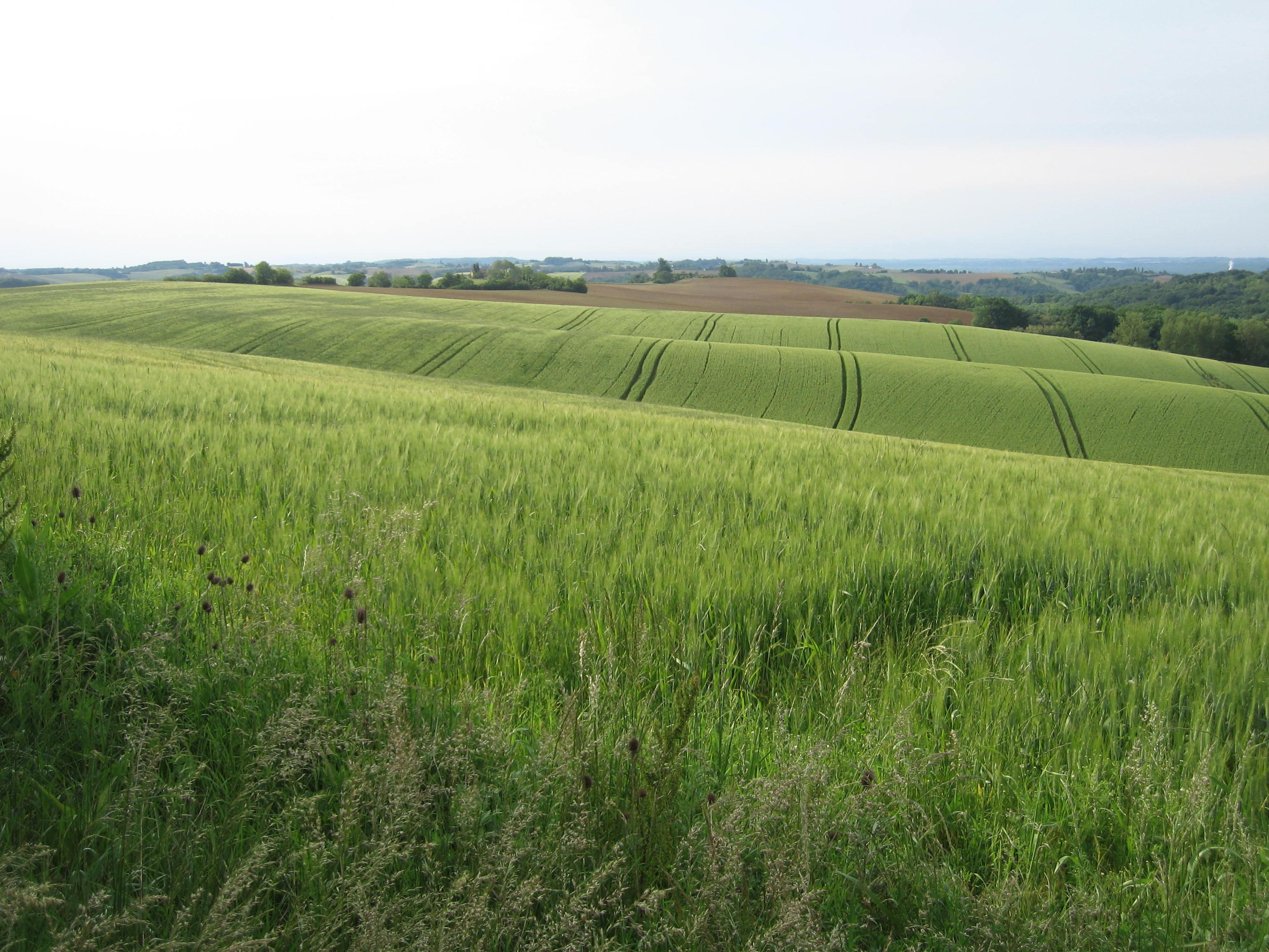 FRANCE - Arable farm for sale. Ref : A05