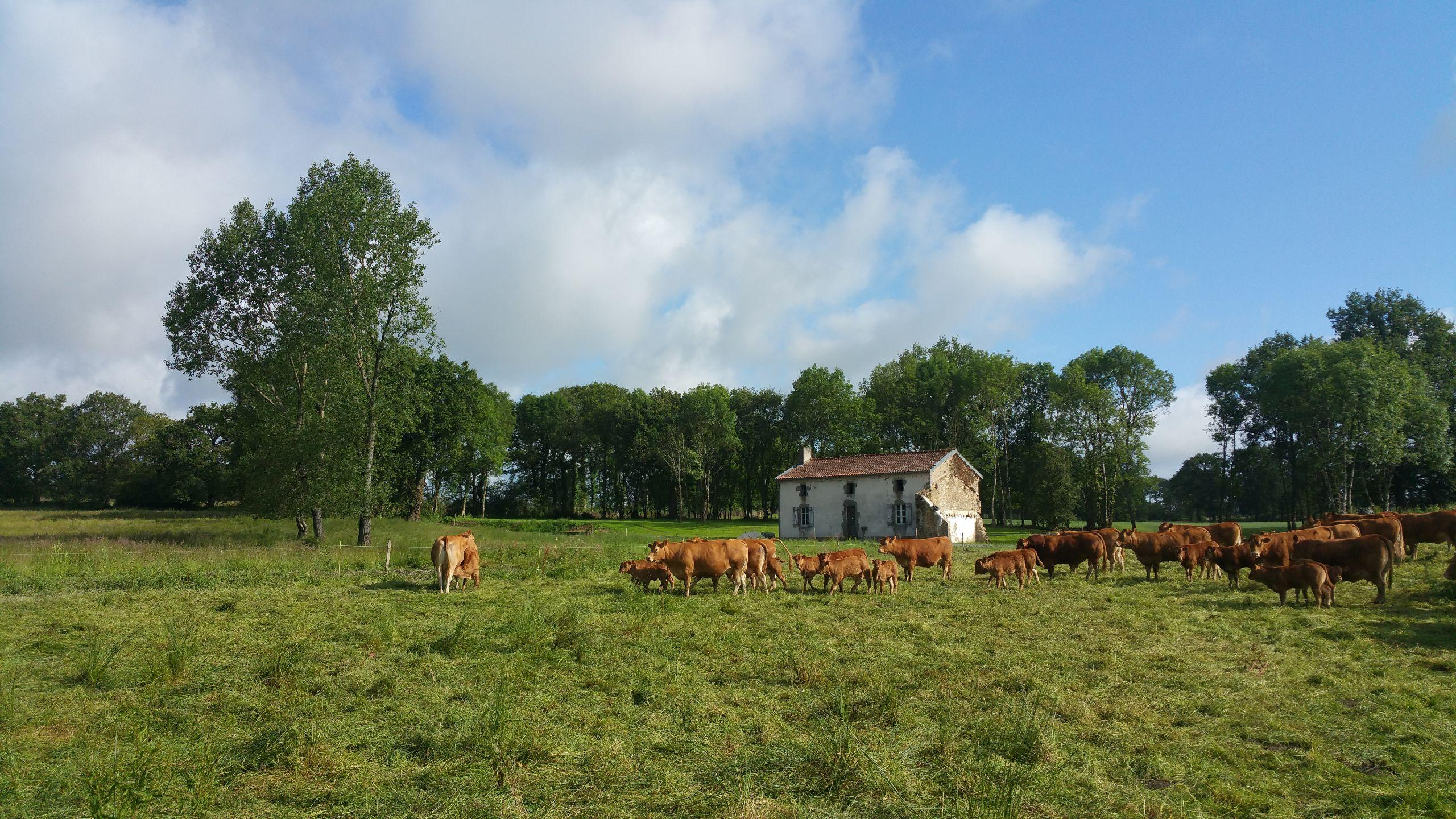 Farm in France -  livestock farm for sale Ref L02