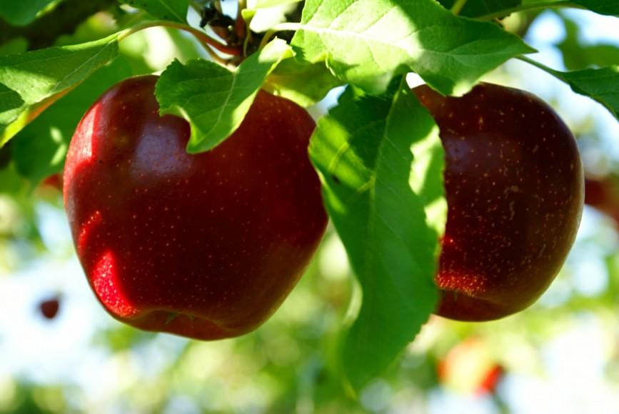 RUSSIA - ORCHARDS FOR SALE - from 500E /HA