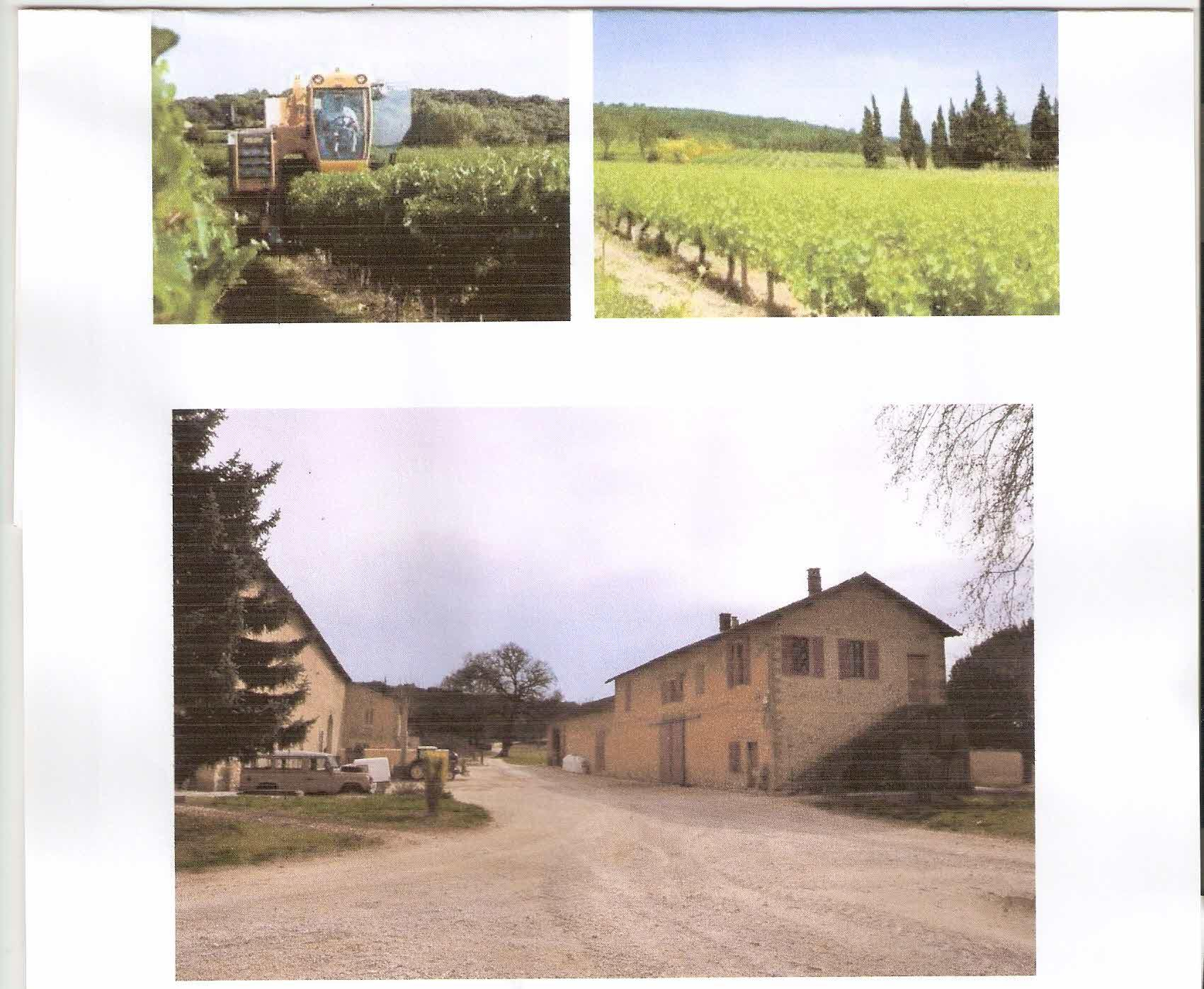 Farm in France - vineyard for sale.   Ref V01