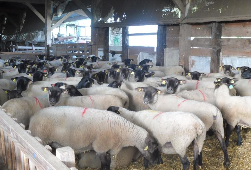 France Good Sheep Farm For Sale With Two Houses